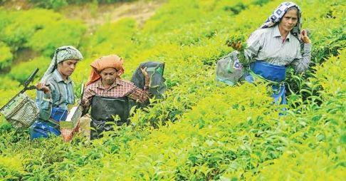 Leaders of the Munnar women tea workers strike. Photo: Aravind Bala in Onmanorama